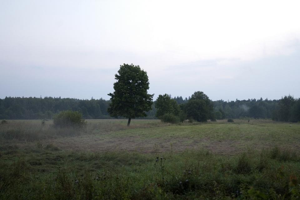 puszcza_bialowieska_obszar_ochrony_scislej_podlasie__dsc7853