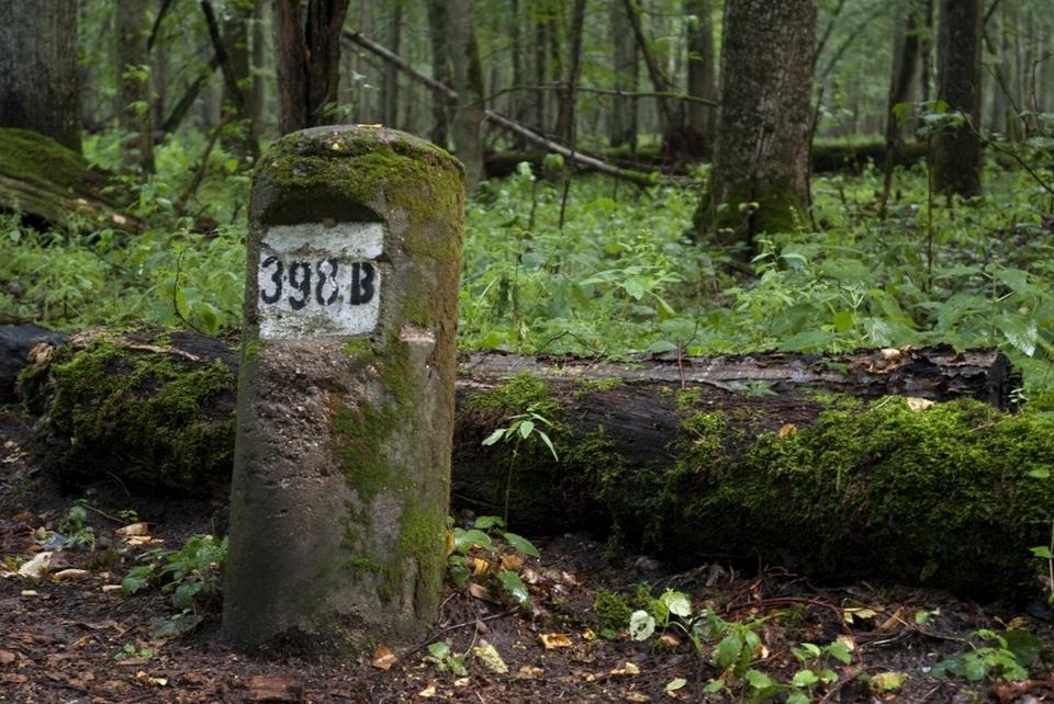 puszcza_bialowieska_obszar_ochrony_scislej_podlasie__dsc7900